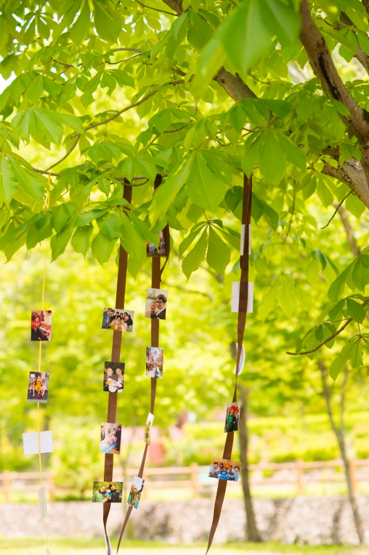 木々から差し込む木漏れ日・・想い出の写真をおしゃれに演出。